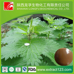 nettle root extract powder stinging nettle extract vegetable extract powder