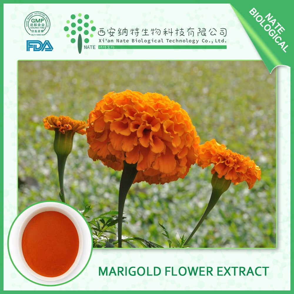 Natural Raw materials Marigold Extract lutein with best quality for medicine field