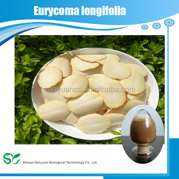 High quality Natural tongkat ali eurycoma longifolia /Ligusticum Extract 10:1