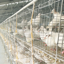 High quality poultry farm pigeons show cages size price
