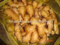 Specification fresh ginger and garlic