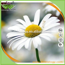high Quality Wild Natural Herbal Tea Organic Chamomile, chamomile Herb, chamomile tea