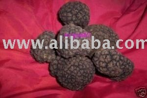 white or black TRUFFLE from Italy