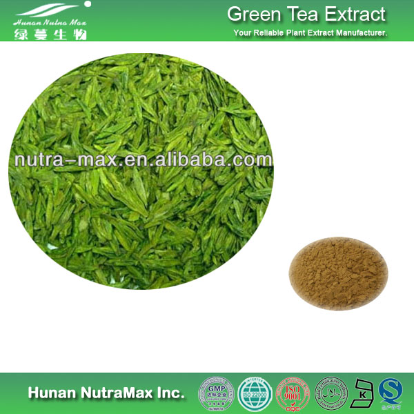 Free Sample Organic Green Tea Extract by Chinese Supplier