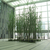 /product-detail/beijing-palm-high-lifelike-indoor-decoration-artificial-bamboo-tree-381058564.html
