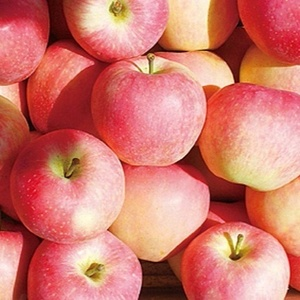 20kg carton fresh apple