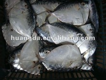 New Catching Frozen Whole Round Moonfish for sales