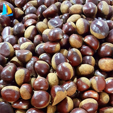 Wholesale Chinese Supplier Chestnut Price Per kg For Sale