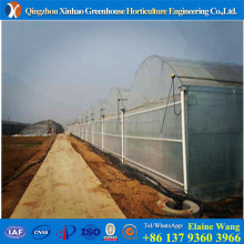 Manufacturer directly sale Low cost light deprivation Roof vents greenhouse for vegetables
