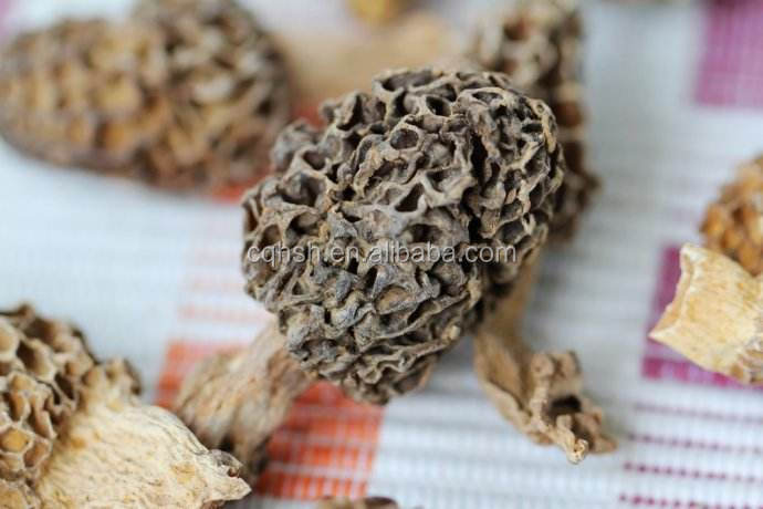 cheap price cultivated morchella esculenta morel mushroom from Sichuan