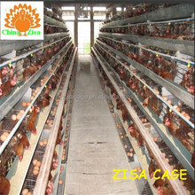 china suppliers poultry equipments price for sale