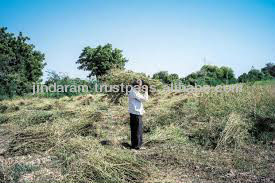 agriculture field of guar gum split in India