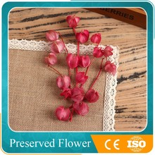 natural decorative dried flower