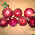 new crop fresh red onions types