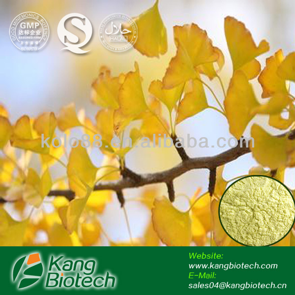 Chinese GMP manufacturer supply folium ginkgo leaf p.e. flavoglycosides & terpene Lactones