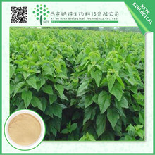 Manufacturer sales Mulberry Leaf Extract 2% DNJ