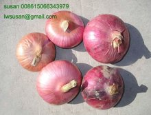 50mm red onion