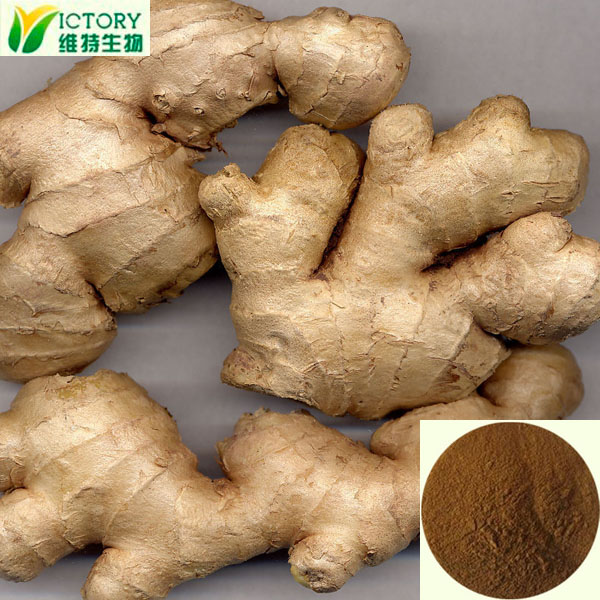 ISO Factory supply pure natural ginger extract 6-gingerol 5% Gingerols HPLC