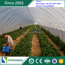 SinoGreen long life high tunnel 200 micron uv resistant plastic film greenhouse
