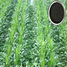 powder Alginic Acid Sources Seaweed Extract Fertilizer for Soil Application