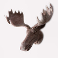 Antique resin animal deer head wall hanging decoration for home
