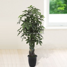 high quality artificial evergreen bonsai plants money tree
