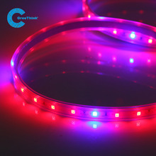 Red and blue light greenhouse 12V smd 5050 agriculture led plant grow light strip