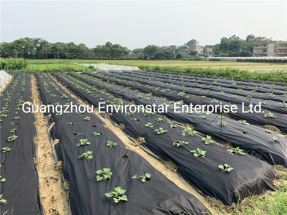 Hydrophilic Black Nonwoven Spunbond Fabric For Garden/weed Control Fabric Plant Bag Material To Protect Fruit