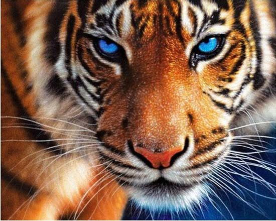 5D Diamond embroidery tiger diamond cross stitch diy diamond painting animal