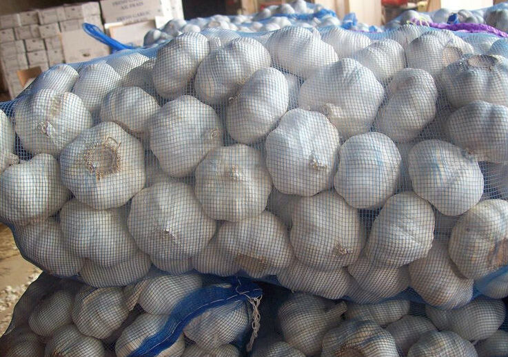 Pure nomal white gralic in 2014, whole sale in China, good price