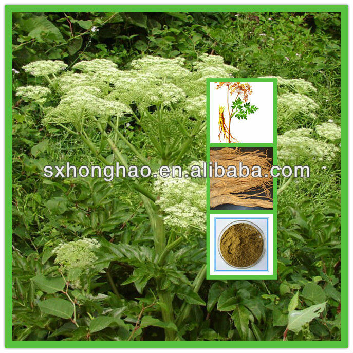 100% Pure Natural Dong Quai Extract0.6%- 1% Ligustilide