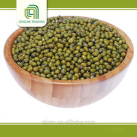 Brand new dried bean with great price geen mung beans