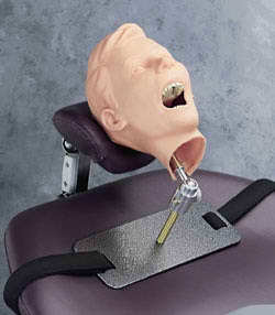 Pediatric X- Ray Dental Manikin