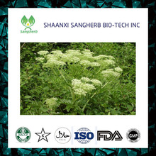 Top quality Pure Angelica Sinensis Extract Powder Ligustilide 1% 4:1 10:1