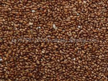 Teff Seeds/Teff grains/Quinoa grains