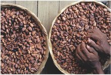 50m/t of Cocoa beans available for sale