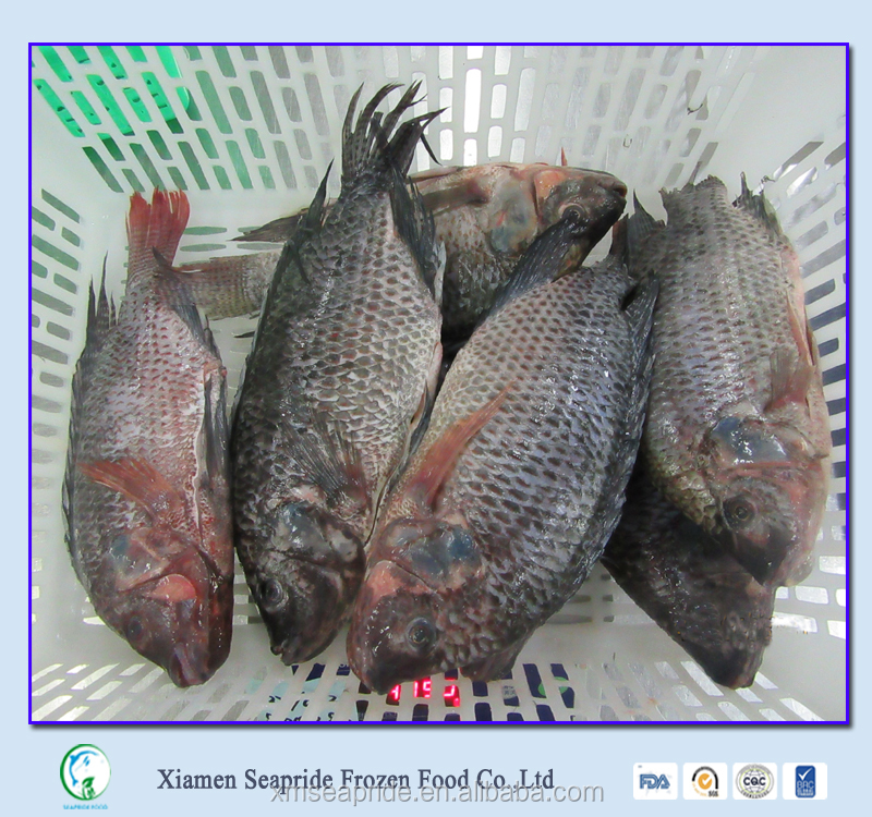 Bulk Frozen Food Tilapia Fish Gutted And Scaled