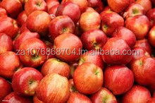 FRESH ROYAL GALA APPLE