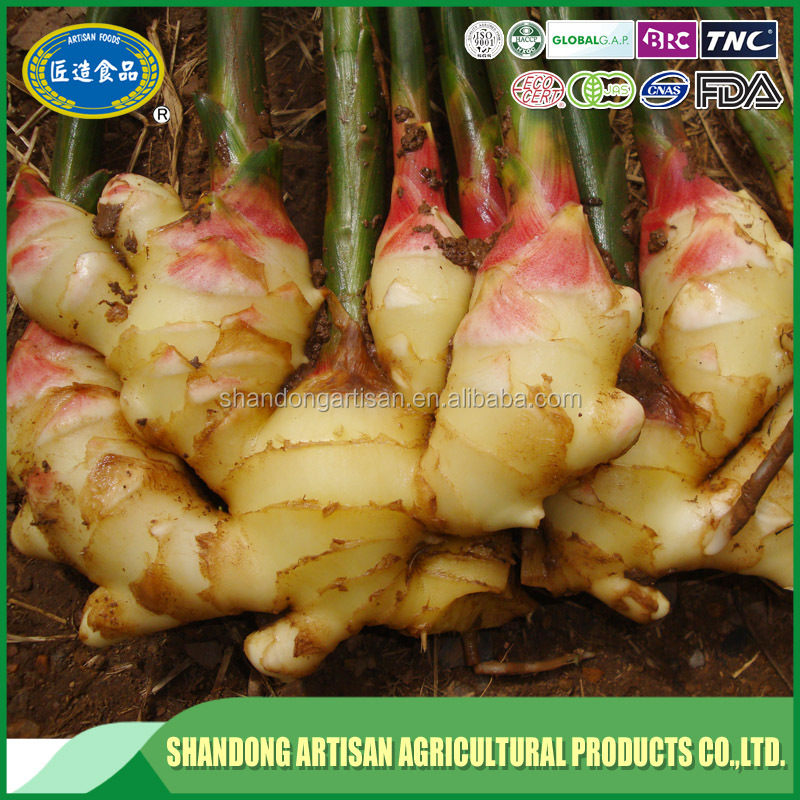2017 factory price yellow color fresh ginger for sale