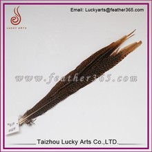Taizhou lucky arts good quality reeves pheasant tail feathers