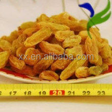 China suppliers best price golden seeded raisin