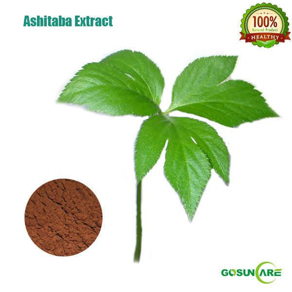 Natural 5:1 Ashitaba Extract Powder/Ashitaba P.E.