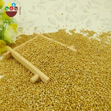 High quality yellow millet in husk with best price
