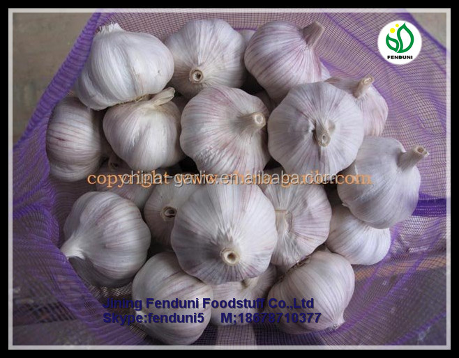high quality Fresh Natural Garlic for sale