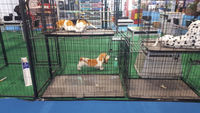 high quality galvanized dog kennel (factory)