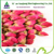 High Quality Natural Rose Hip Extract 10:1