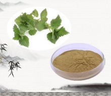 High quality and 100% natural nettle root extract stinging nettle extract nettle leaf