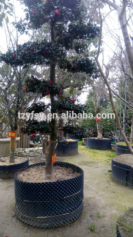 China Taizhou Prune Plant Root Container & Pot