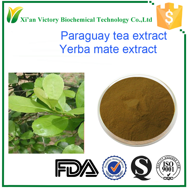 Top quality Yerba Mate extract Paraguay tea powder