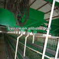 automatic feeding system for chicken